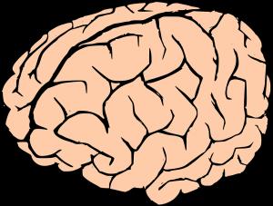 brain-155190_960_720